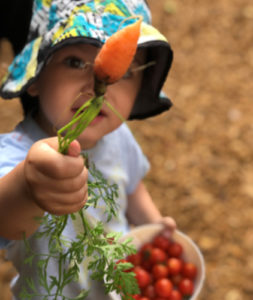 Young boy holding fresh vegetables