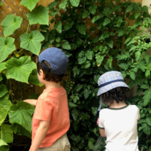 Boys looking at vining plants